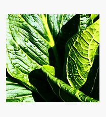 Skunk Cabbage Portrait Photographic Print