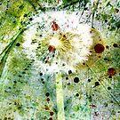 «Diente de león primavera» de WesternExposure