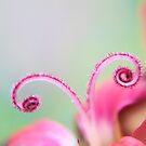 Curl by Stephanie Hillson