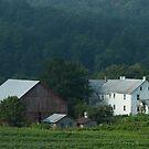 Stauffer Farm Summer by Michael  Dreese