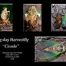 """Dog-day Harvestfly  """"Cicada"""" poster by DigitallyStill"""
