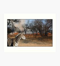 Zebra and Bush Fire Art Print