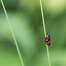 Insect macro by pietrofoto