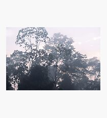The mysteries of the morning mist Photographic Print
