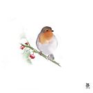 Fluffy robin by Peter Taylor