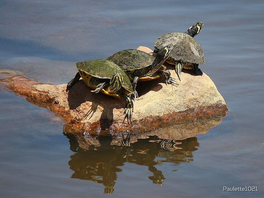 On a Rock by Paulette1021