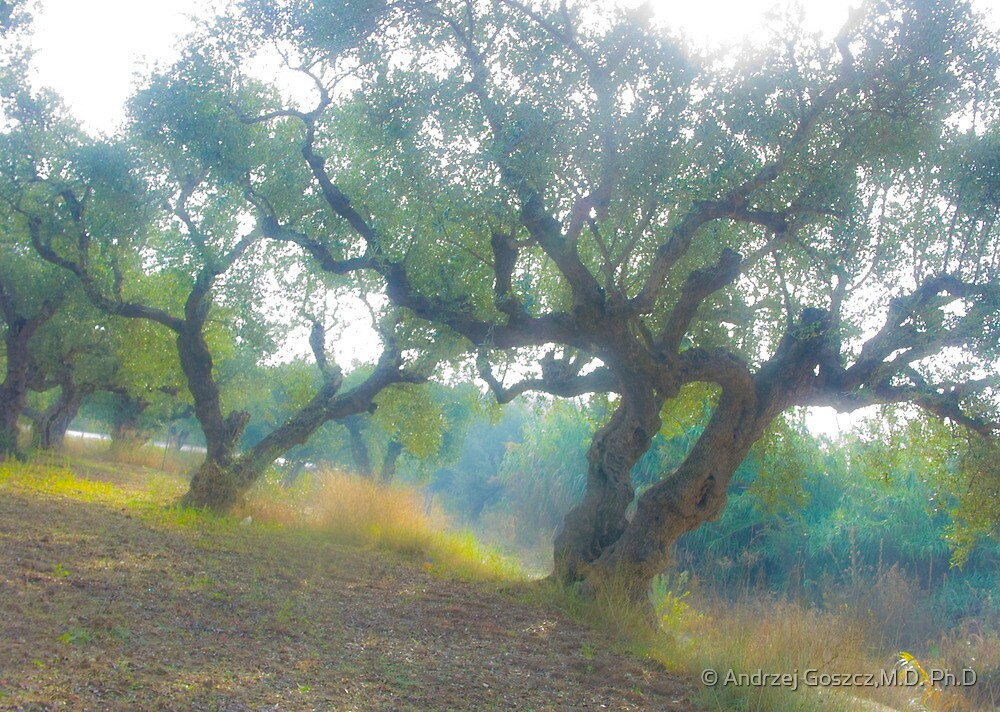 Views 3954***Olive trees. Zakintos. Greece. by Doctor Andrzej Goszcz.   Thanks  friends !!! Featured in Avant~Garde Art . Thanks !  by © Andrzej Goszcz,M.D. Ph.D