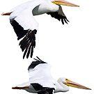White Pelicans in Flight by BluEartharts