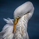 Großer weißer Reiher-Nahaufnahme-Beschneiden von TJ Baccari Photography