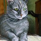 Grey Tabby Cat in Sun by minorsaint