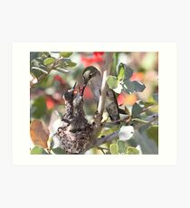 Momma Costa's hummingbird with babies. Art Print