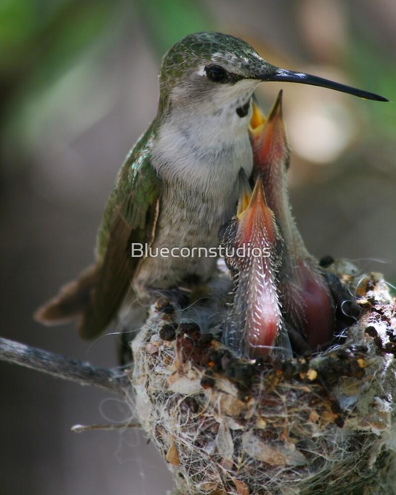 Momma Costa's hummingbird by Bluecornstudios