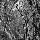 Single Bridge tree tunnel by Anna Goodchild