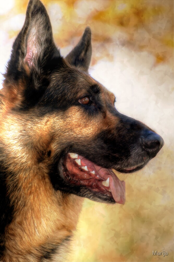 Our Boy Bruzer by Marija