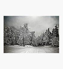 Winter White Photographic Print