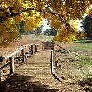 autumn lane by Bettysplace