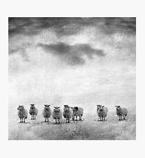 woollen Photographic Print