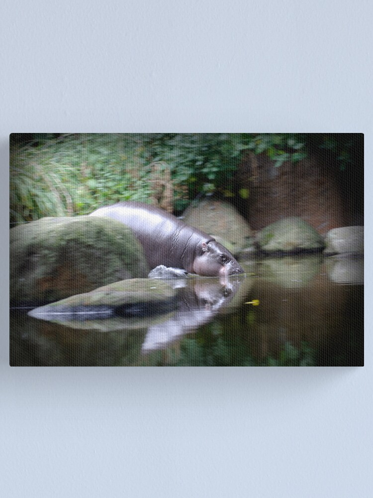 Alternate view of Pigmy Hippo Canvas Print