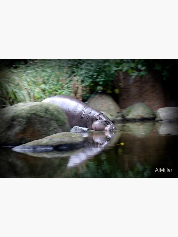 Pigmy Hippo by AlMiller