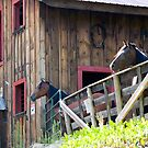 Two Stoic Horses by Monica M. Scanlan