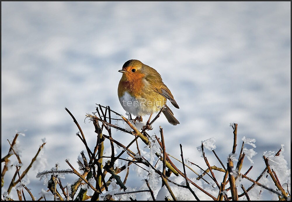 Robin at Redesmere by ten2eight