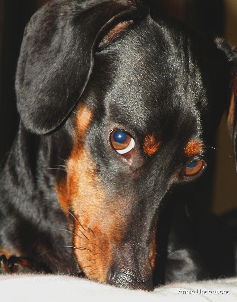 Dudley by Annie Underwood
