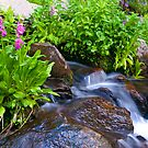 Parry's Primrose and Falls by Gary Lengyel