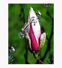 """Magnolia~Water"" Photographic Print"