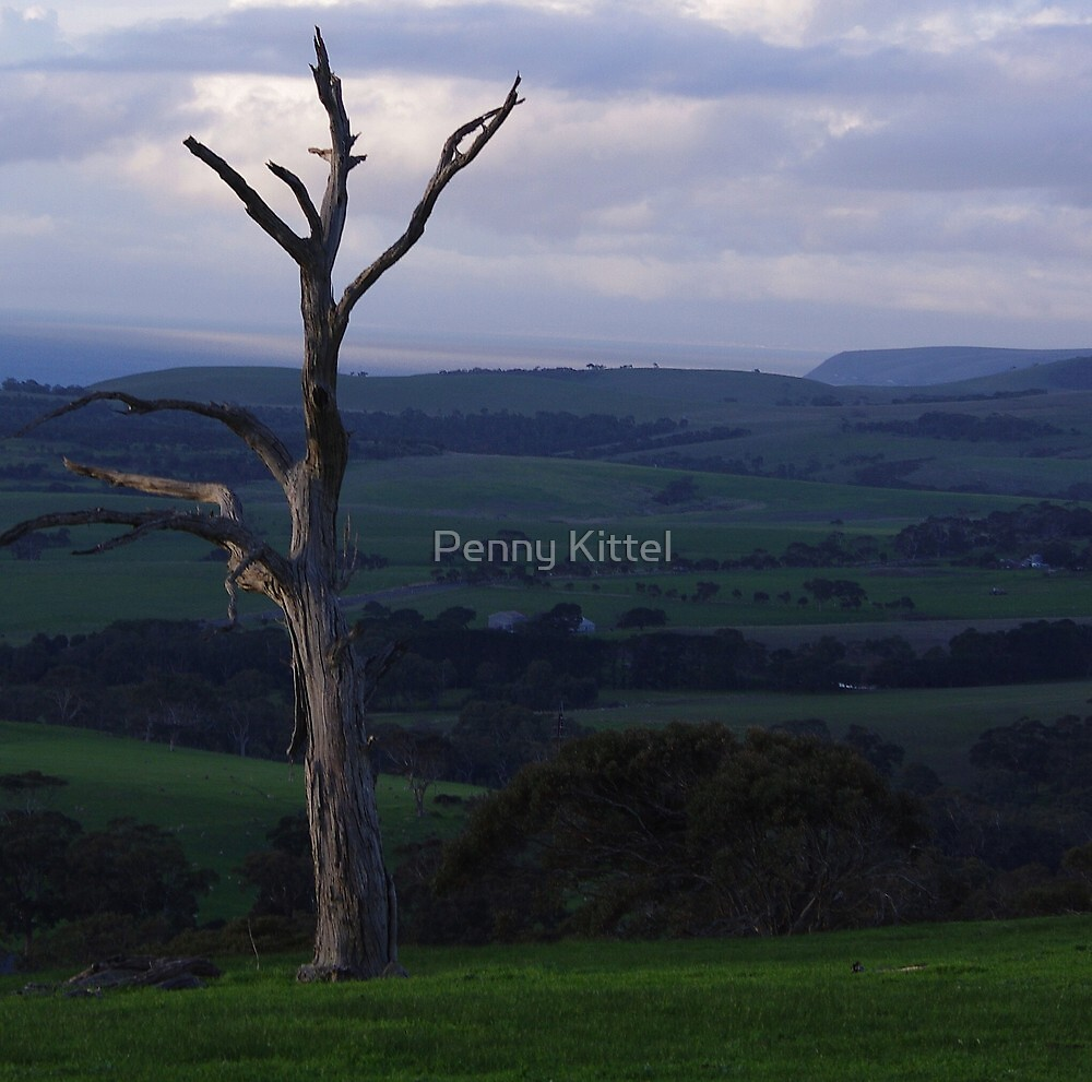 'Been there a while.. by Penny Kittel