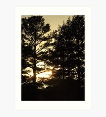 Sun setting behind the trees Art Print