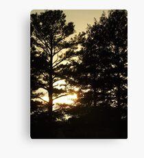 Sun setting behind the trees Canvas Print