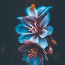 « Big Blue » par Philippe Sainte-Laudy
