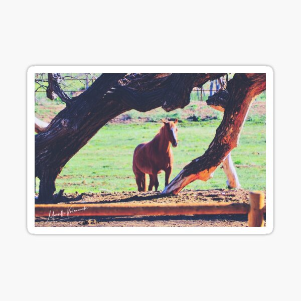 Abiquiu Horse, New Mexico Sticker