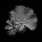 A monochrome Flower World : Tolmiea by PhotomasWorld