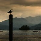 Keeping an eye on Windermere by RodneyCleasby