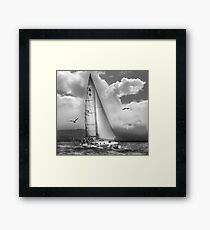Bird Watch Sail Framed Print