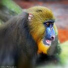 A Baboons Smile by Colleen Rohrbaugh