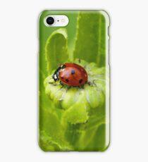 Macro Ladybug on Garden Plant iPhone Case/Skin