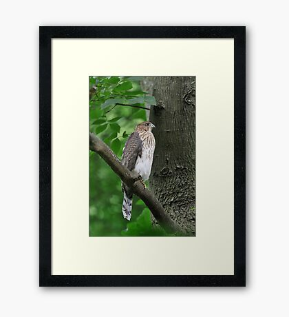 Quietly Perched Framed Print
