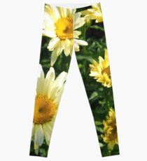 Daisy Flower Patch waking to the Morning Sunlight  Leggings