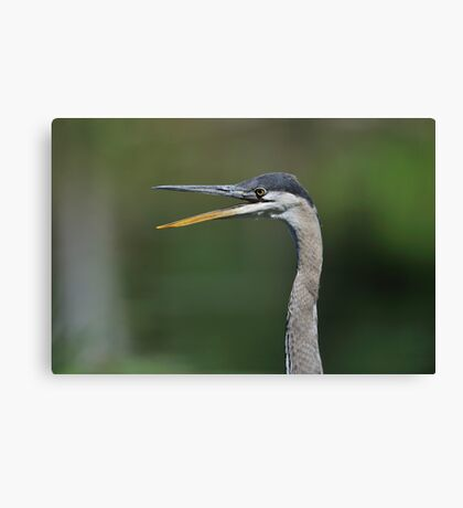 Say What! Canvas Print