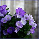 Bellflowers by Bluesrose