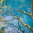 Amazing colors of mossy tree and deep lake at Jiuzhaigou Park by Sergey Orlov