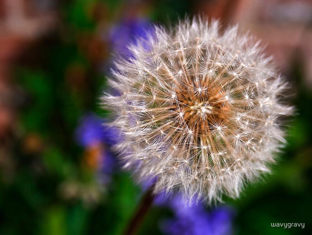 Fluff by wavygravy