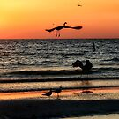 Birds at Sunset, Indian Shores by Brian Tarr