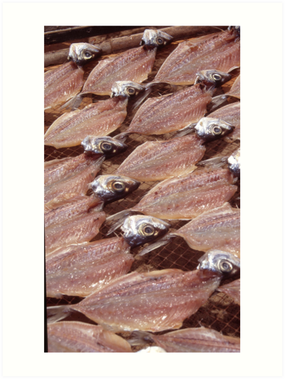 Sardines Drying In The Sun by rorycobbe