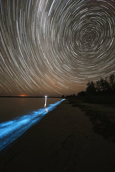Bioluminescence with Star Trails by Phil Hart