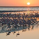 The setting sun and flamingo silhouettes by Sergey Orlov