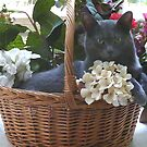 Sammy in a Basket by Tibby Steedly