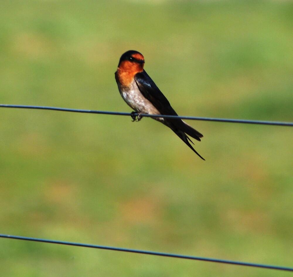 bird on a wire by Kateogrady